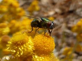Honey bees aren't the only pollinators