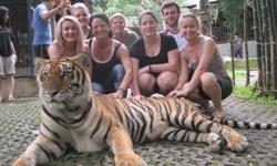 Paras Thai tiger_250x150