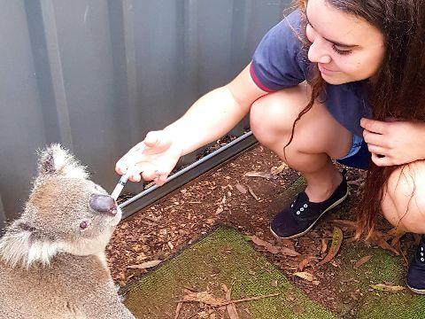 Teresa and koala